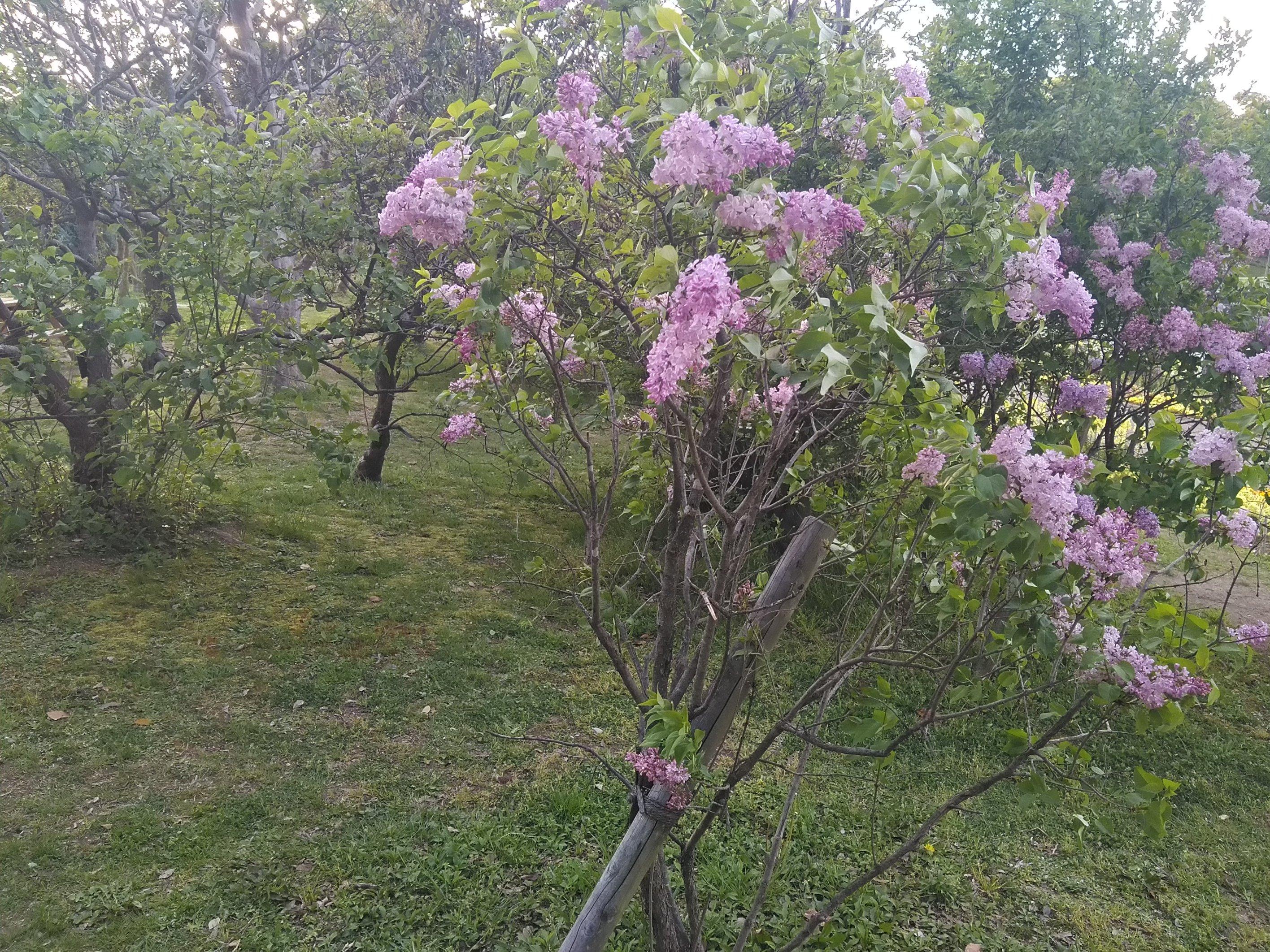春に彩る庭木って?おすすめの春に花を咲かす庭木 part.1