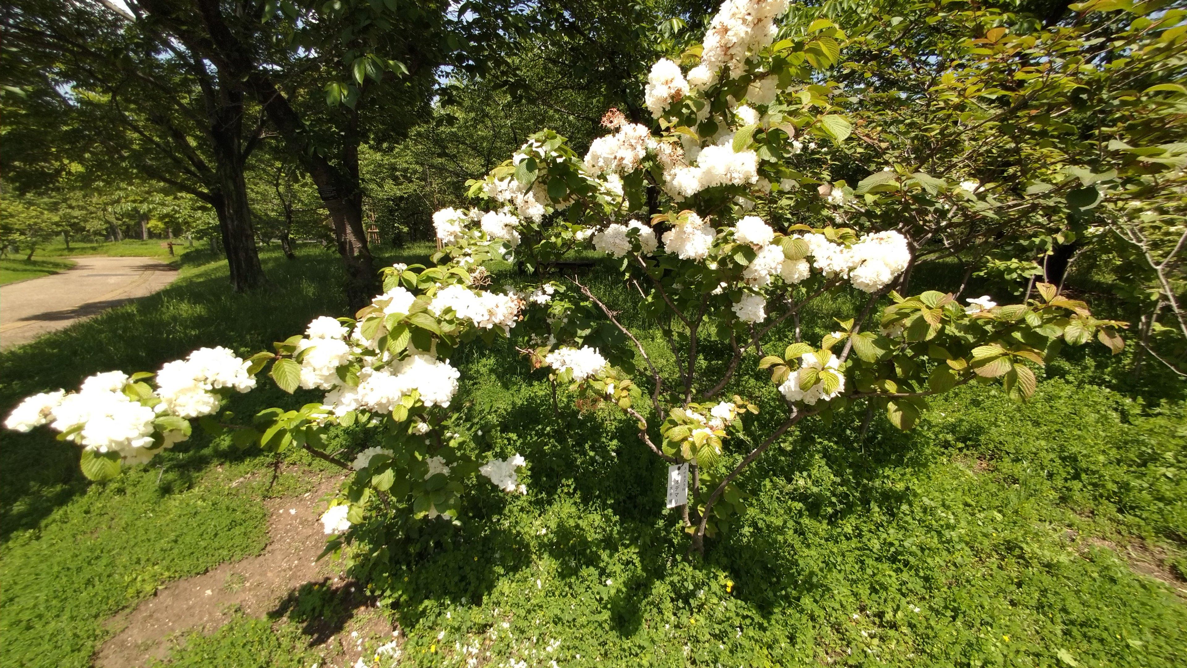 春に彩る庭木って?おすすめの春に花を咲かす庭木 part.2